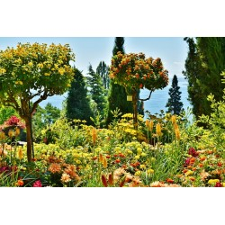 Botanic Garden (fragrance oil)