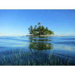Coconut Island (fragrance oil)