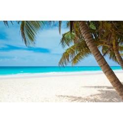 Paradise Beach (fragrance oil)